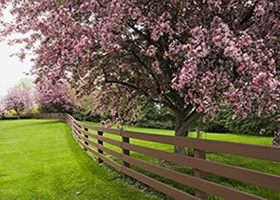 The blossom trees along the fence.